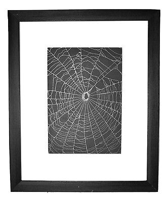 Spider Web Preserved in a Matted 8 x 10 Black Frame Handmade