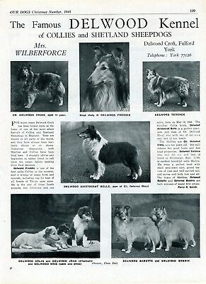 Collie Dog Breed Kennel Advert Print Page Delwood Kennel Our Dogs 1948