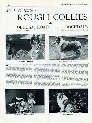 Collie Dog Breed Kennel Advert Print Page Mr Hillier's Dogs Our Dogs 1946