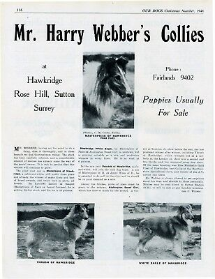 Collie Dog Breed Kennel Advert Print Page Hawkridge Kennels Our Dogs 1946