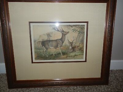 Gorgeous Antique Deer Print by Josef Wolf