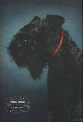 1942 Champion Sophisticated Ly Terrier Henry Waxman  Ad 16652