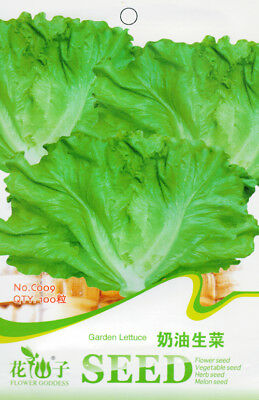 Original Package 100 Lettuce Seeds Butter Head Lettuce Garden Vegetable C009
