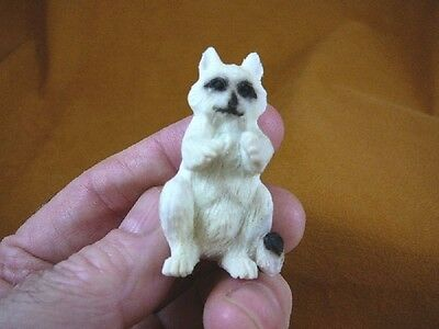 (RAC-1) little baby white Racoon shed ANTLER figurine Bali detailed carving