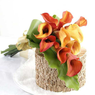 1 Pack 100 Calla Lily Seeds Rare Colorful  For Home Garden Flower Seed S070