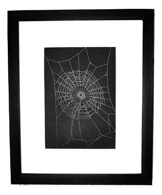 Spider Web of Orchard Spider Preserved in a Matted 8 x 10 Black Frame Handmade