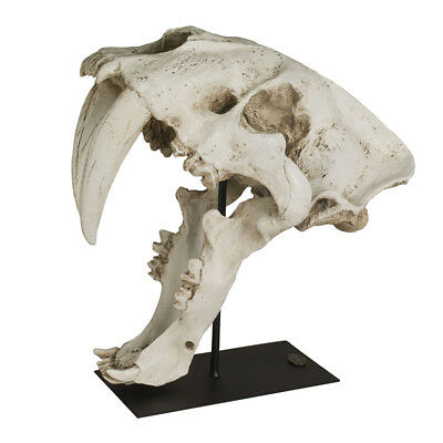 """Saber Tooth Tiger Skull Smilodon Replica Figurine 13"""" Tabletop Display Stand New"""