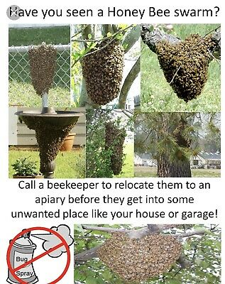 5 Bee Swarm Lure Beekeeping
