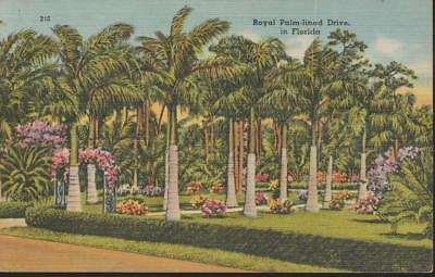 Florida Royal Palm Lined Drive Height Beauty Vintage Linen PC Rare