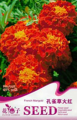 Original Package 50 Red Peacock Grass Seeds Marigold Tagetes Patula Flowers A258