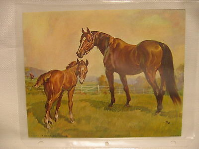 Vintage Hardboard LITHO Print  Horse and Colt    #P-205 Brown - Horses  EUC