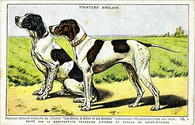 PC DOGS, A PAIR OF ENGLISH POINTER DOGS, VINTAGE POSTCARD (b3572)