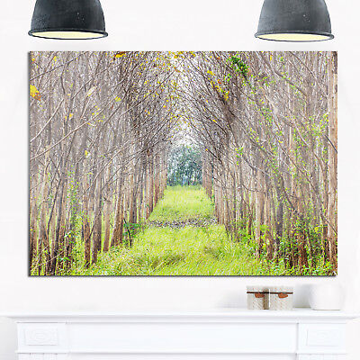 Pathway Through Fall Green Trees - Landscape Photo Glossy Metal Wall Art
