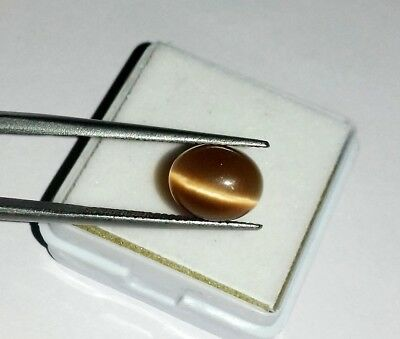 4.65 Ct Beautiful Natural Cats Eye Golden Color Oval Cabochon Chrysoberyl Gems