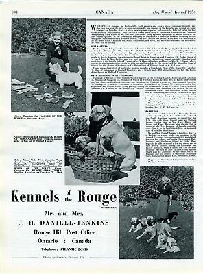 """Bullmastiff Dog Breed Kennel Advert Print Page """"Of The Rouge"""" Dog World 1954"""