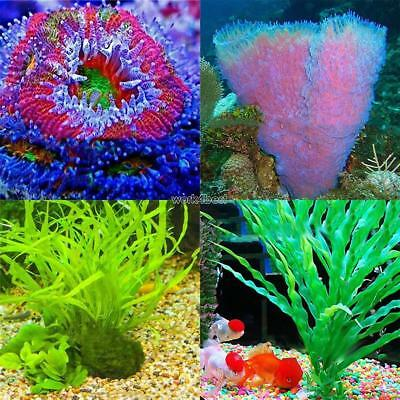Bulk Aquarium Grass Mixed Seeds Water Aquatic Home Fish Tank Plant Decor WST