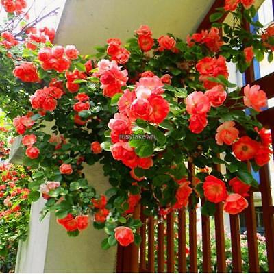 100Pcs Perfume Climbing Plants Colorful Rock Cress Flower Seeds RLWH 01