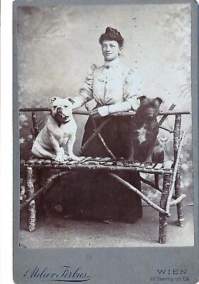 Vintage Foto photo card de visite CDV Portrait Wien Dog Hunde bulldog mastiff 2
