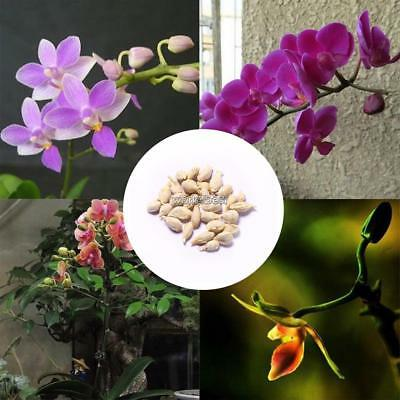 100Pcs Rare Mini Orchid Seeds Flower Phalaenopsis Indoor Garden WST