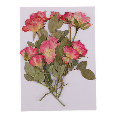 10PCS Beautiful Pressed Rose Flower Dried Flowers for Art Craft Scrapbooking