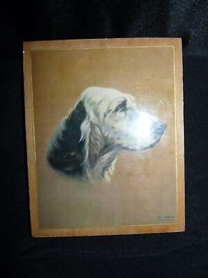 Small C. Moss 1938 Dog Pointer or Spaniel Print Mounted on Wood Board