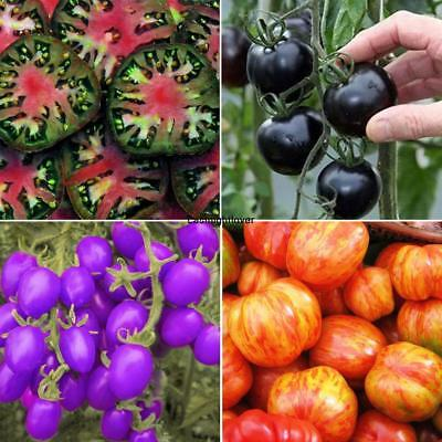 20Pcs Garden Balcony Beautiful Vegetable Plants Multi-color Tomato Seeds ILOE