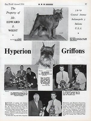 Brussels Griffon Dog World Breed Kennel Advert Print Page Hyperion Kennel 1954