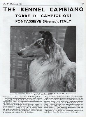 Rough Collie Dog World Breed Kennel Advert Print Page Cambiano Kennel 1954