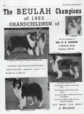 Rough Collie Dog World Breed Kennel Advert Print Page Beulah Kennel 1954