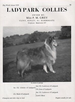 Rough Collie Dog World Breed Kennel Advert Print Page Ladypark Kennel 1959
