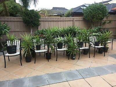 Plants for sale (Altona, VIC, 3018) BUY 2 & GET 1 FREE