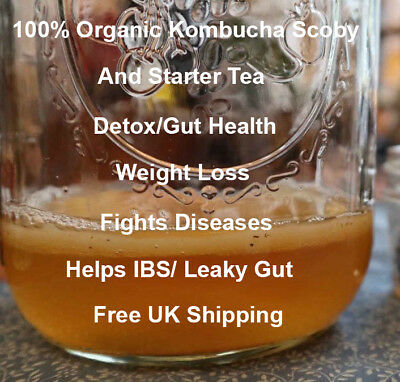 Organic Kombucha Scoby Free Uk Post Starter Tea Probiotic Gut Health Weight Loss