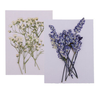 20pcs Real Pressed Dried Babysbreath Sage Flower For Resin Jewelry Craft DIY