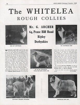 Rough Collie Our Dogs Breed Kennel Advert Print Page Whitelea Kennel 1949