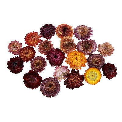 Pressed Dried Natural Daisy Flower Embellishments Resin Jewelry Crafts 20g
