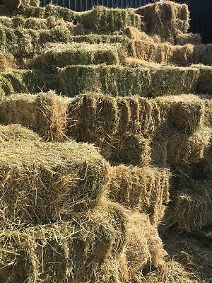 Conventional Bales Hay