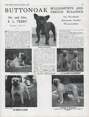 Bullmastiff Buttonoak Kennels Dog Breed Kennel Advert Print Page  Our Dogs 1951