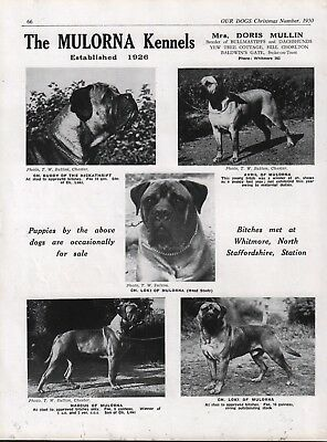 Bullmastiff Mulorna Kennels Dog Breed Kennel Advert Print Page  Our Dogs 1950