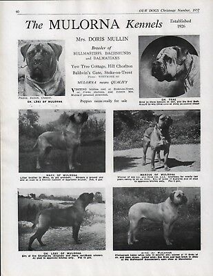 Bullmastiff Mulorna Kennels Dog Breed Kennel Advert Print Page  Our Dogs 1952