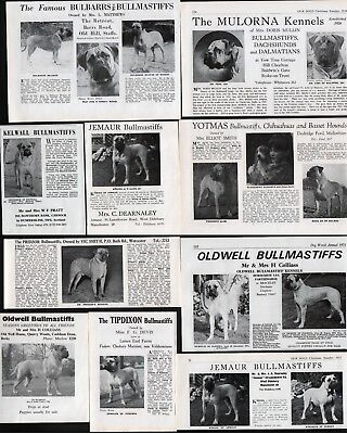 Bullmastiff Dog Breed Kennel Adverts Part Page Cutting 1952-1973 Various Kennels