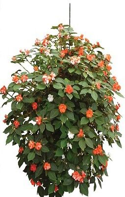 Vertical Long Round  Wall Planter for Herbs Flowers & Plants strawberries