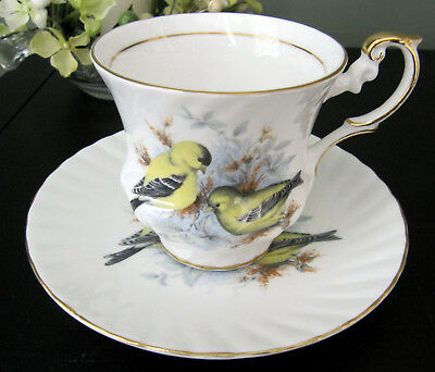 Queen's Rosina Bone China Cup and Saucer Birds Of America Gold Finch