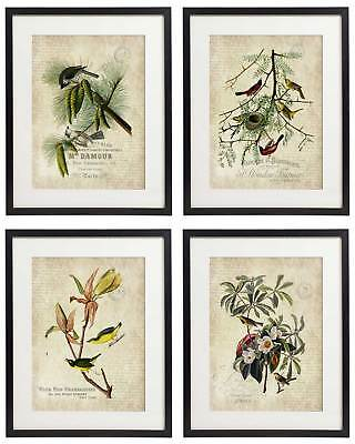 Vintage Bird & Botanical No.7 Home Decor Wall Art Print Set of 4 Prints UNFRAMED