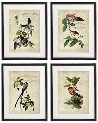Vintage Bird & Botanical No.9 Home Decor Wall Art Print Set of 4 Prints UNFRAMED