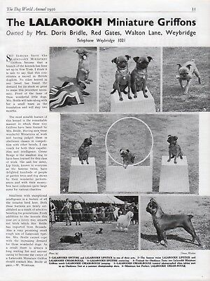 Brussels Griffon Dog World Breed Kennel Advert Print Page Lalarookh Kennel 1950