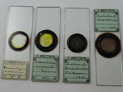 4 Interesting Victorian Microscope Slides by Rare Mounter T Brittain