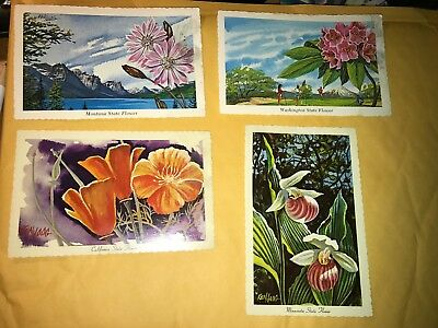 Vintage Lot of 7 State Flower Post Cards Postcards TX SD WA MN CA MT NY