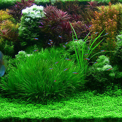 Nice Mixed Pet Fish Aquarium Grass Seed Water Aquatic Plant Seeds 1000Pcs hot