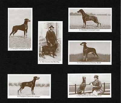 Doberman Pinscher Dogs Of Yesteryear 2Nd Series 6 Named Dog Photo Trade Cards