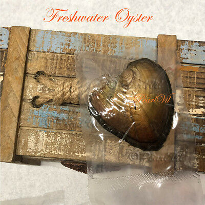 3/5/8/10pcs Freshwater Oysters Each With 6-7mm Pearl - Located USA